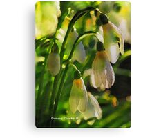 Harbingers of Spring Canvas Print