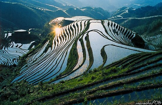 Rice Terraces 2(Banaue,Phil.) by saseoche