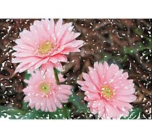 Painted Daisies Photographic Print