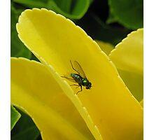 Shiny Fly Photographic Print