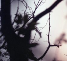 Tree branches on summer evening  in Spain square medium format film analogue photographer Sticker