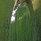 Graceful Green Arch by phil decocco