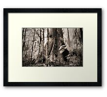Mountain Ash, Yarra Ranges. Framed Print