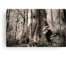 Mountain Ash, Yarra Ranges. Canvas Print