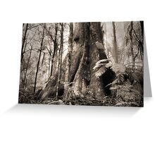 Mountain Ash, Yarra Ranges. Greeting Card