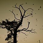 Crow tree by Amanda Gazidis