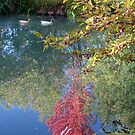 Fall Pond by tkrosevear