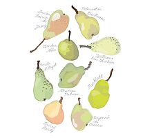 9 Pears in Green Photographic Print