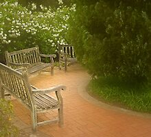 Benches  by Rosalie Dale