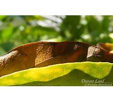 Distant Land Photographic Print