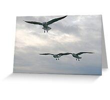 Gulls squadron Greeting Card