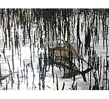 Muddy Mangroves Photographic Print