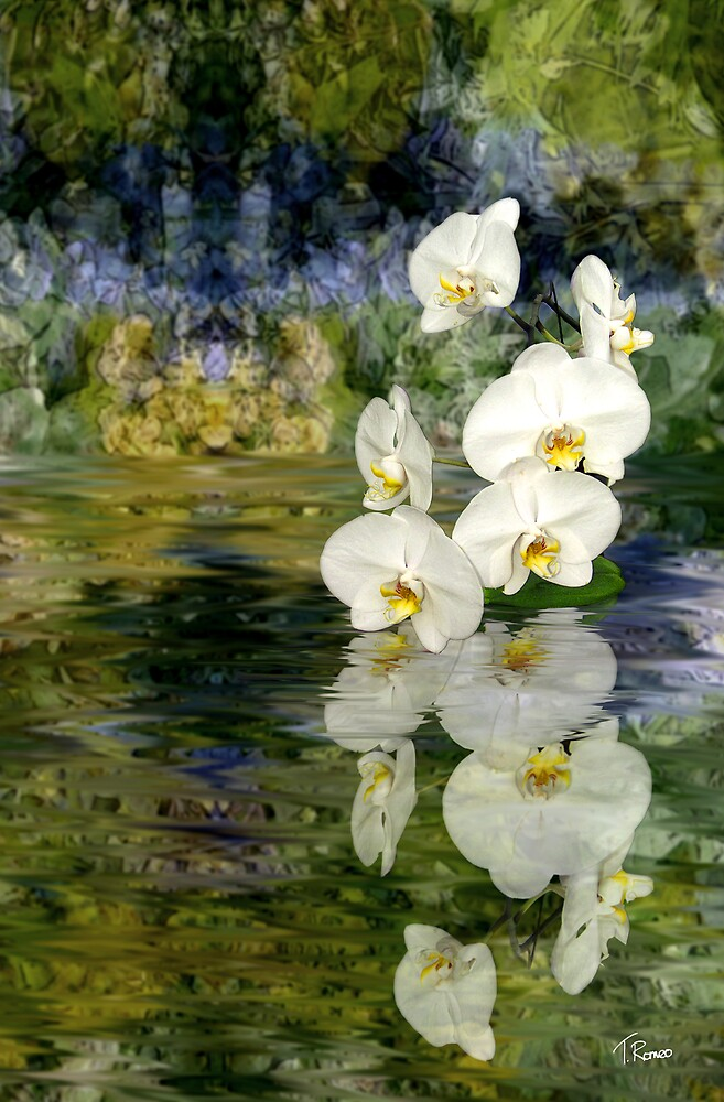Water Orchids by Tom Romeo
