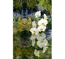 Water Orchids Photographic Print