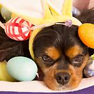 Cavalier King Charles Spaniel Easter Eggs by daphsam