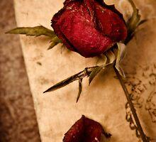 Libro viejo y Rosa seca by juanc