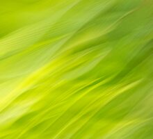 Palms in Flames by Marilyn Cornwell