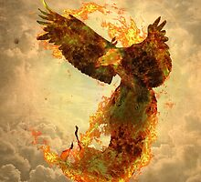 Phoenix by barruf