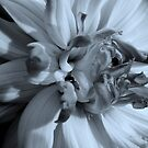 B&W Flower 2 by Stacy Colean