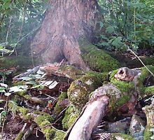 Forest Majesty by patsyspics