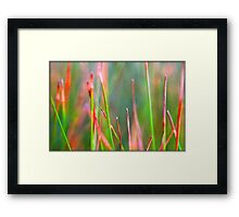 Untitled.00051 Framed Print
