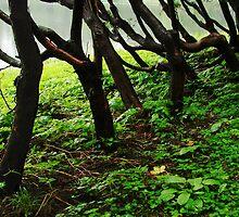 Autumnal park by YanBi