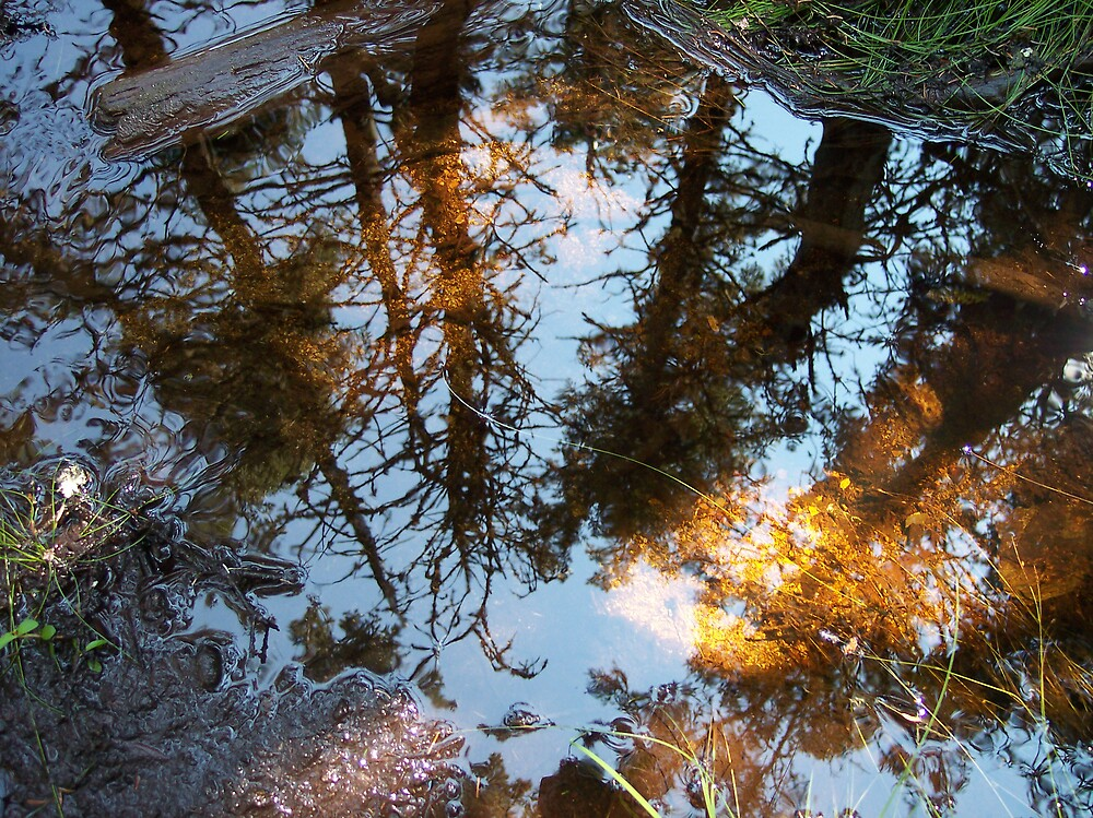 Into The Looking Glass by Geoffrey