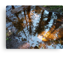 Into The Looking Glass Canvas Print