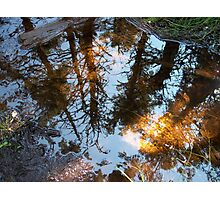 Into The Looking Glass Photographic Print