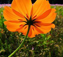#609  Delicate Beauty by MyInnereyeMike