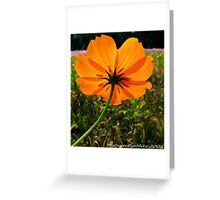 #609  Delicate Beauty Greeting Card