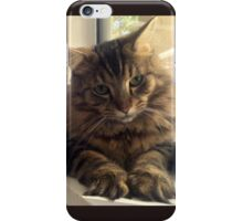 Maine Coon Cat iPhone Case/Skin