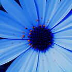 Blue Daisy Blue by Jan Richardson