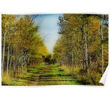 Autumn Colours VI Poster