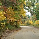 The road to Pine Pointe by amberzimmerman