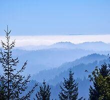 Fog Lifting by smilinginsonoma