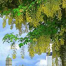 Laburnum...............................The Goldenchain Tree by Fara