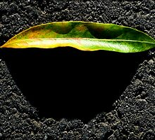 Untitled.00119 by Byron  Gates Jr