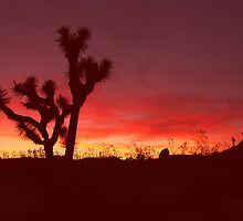 Joshua Tree Sunset by steveberlin