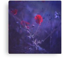 Red poppy in blue - medium format analog Hasselblad film photo Canvas Print