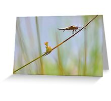 Male Chaser . Greeting Card