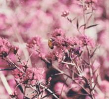 Pollination  Sticker