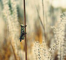 Grasshopper by Bethany Helzer