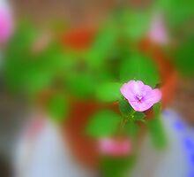 Pinky by DottieDees