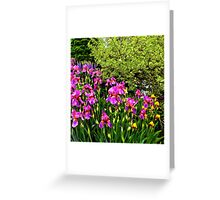 Border of Beauty Greeting Card