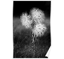 Milky Bouquet Poster