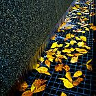 Autumn Grate by Myron Watamaniuk