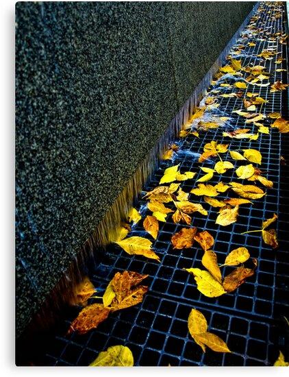 Autumn Grate by Myron Watamaniuk