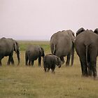 Elephants Behind by Ann Douthat