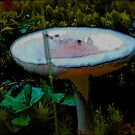 Midnight Mushroom Patch ~ Featured in Imagewritring Group at Redbubble by Jack McCabe
